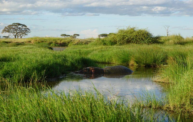 Hippo Safari Tanzania