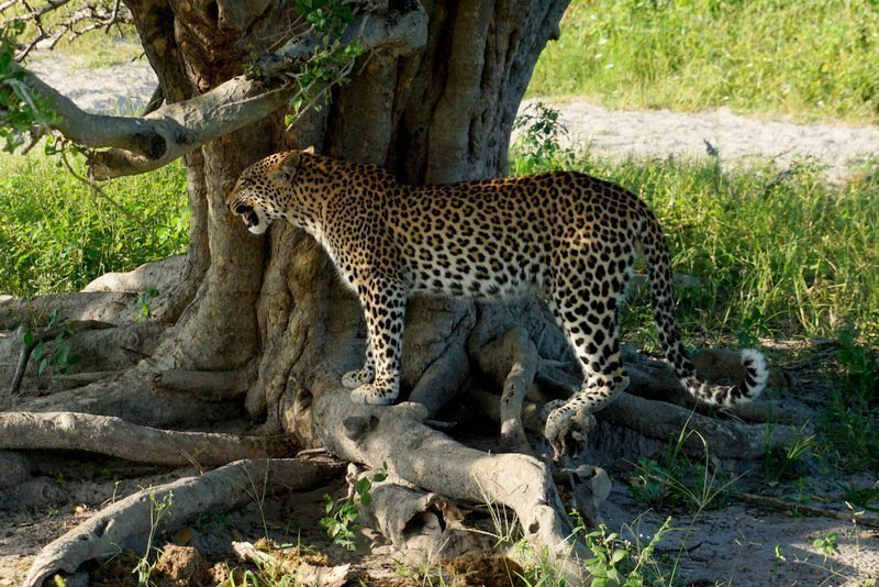How to visit Chobe National Park on a budget