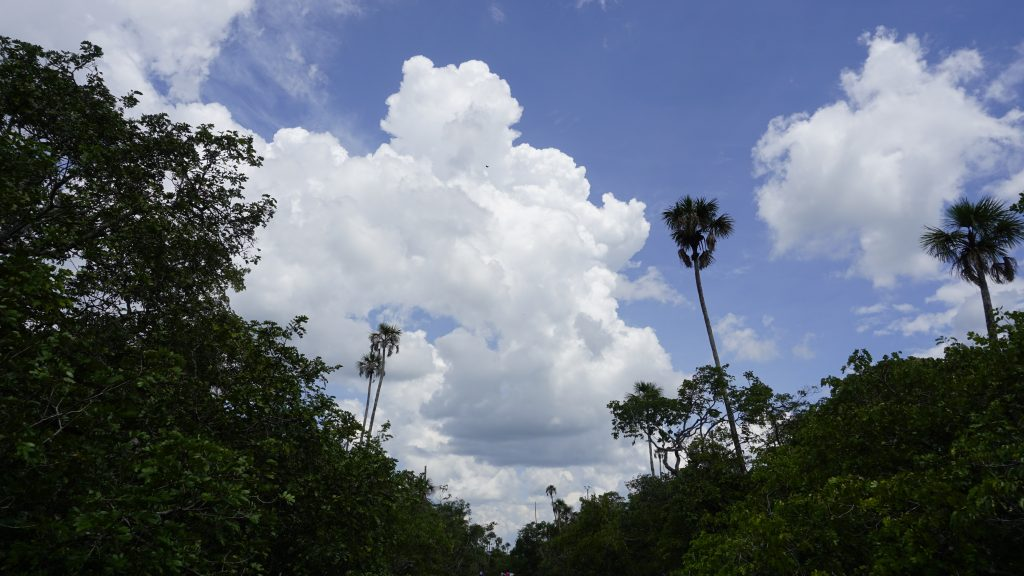 Blue Skies and trees while visiting Caño Cristales