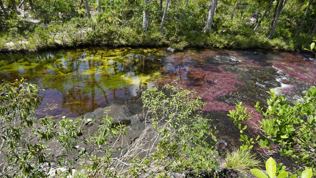 colors in the water while visiting Caño Cristales