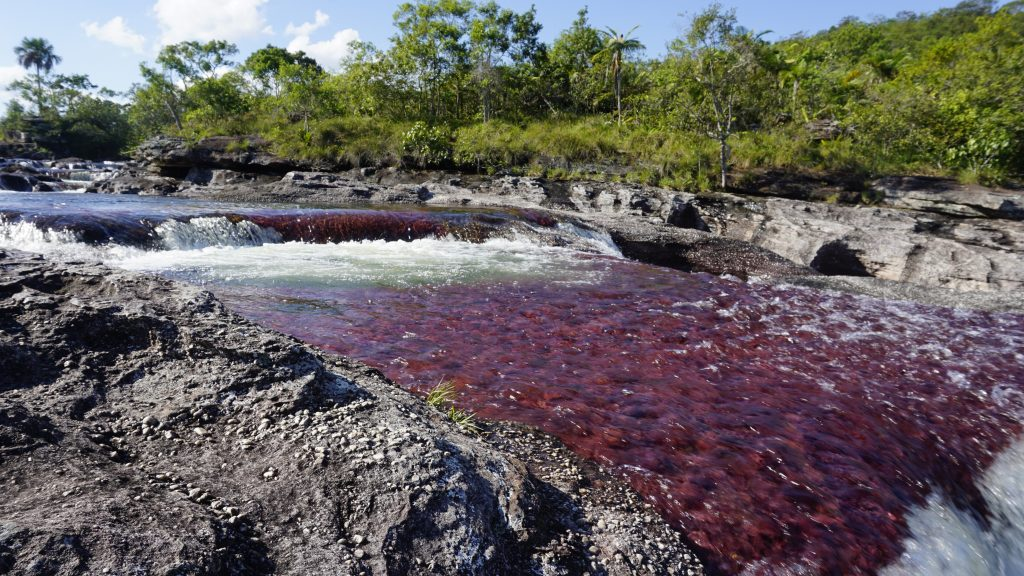photo of river while visiting Caño Cristales